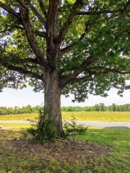 lynching-tree-3-1_LCT